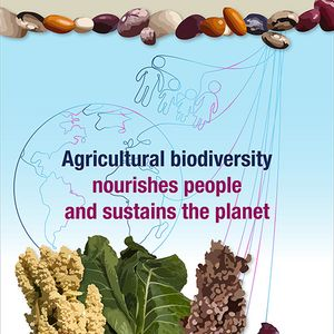 Courtesy of Bioversity International