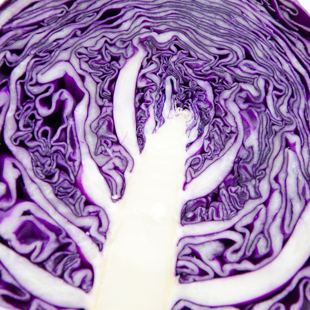 observe purple cabbage