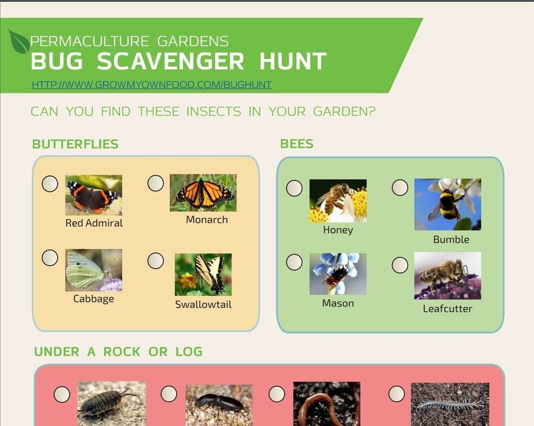 Observe through the Bug Hunt Challenge