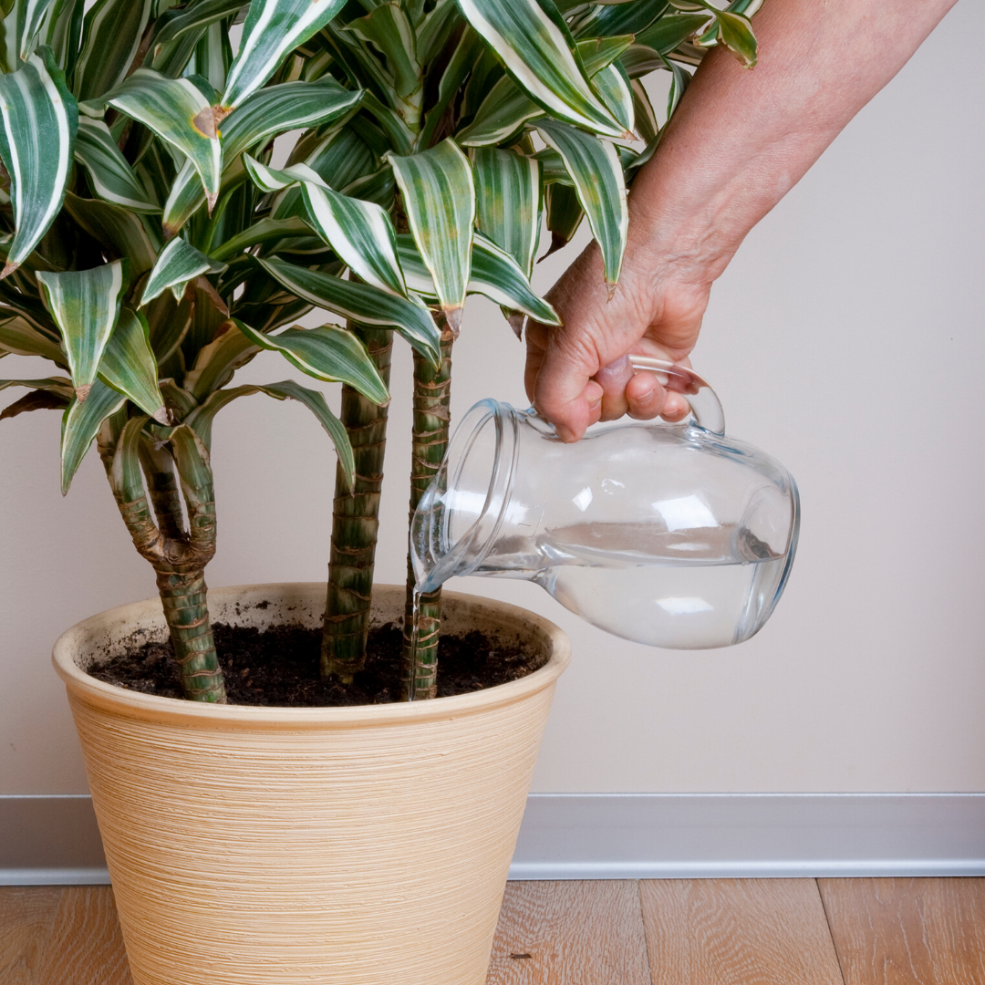 indoor gardening water