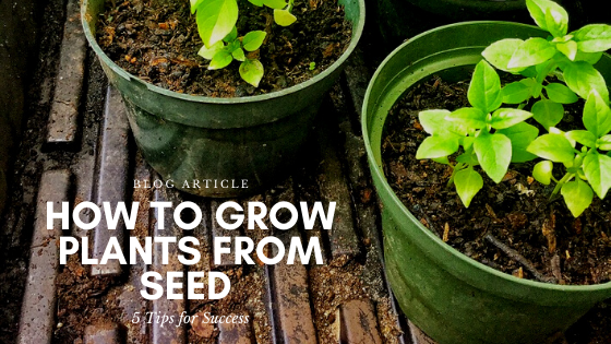 """Featured image for """"How to Grow Plants from Seed: 5 Tips for Success"""""""