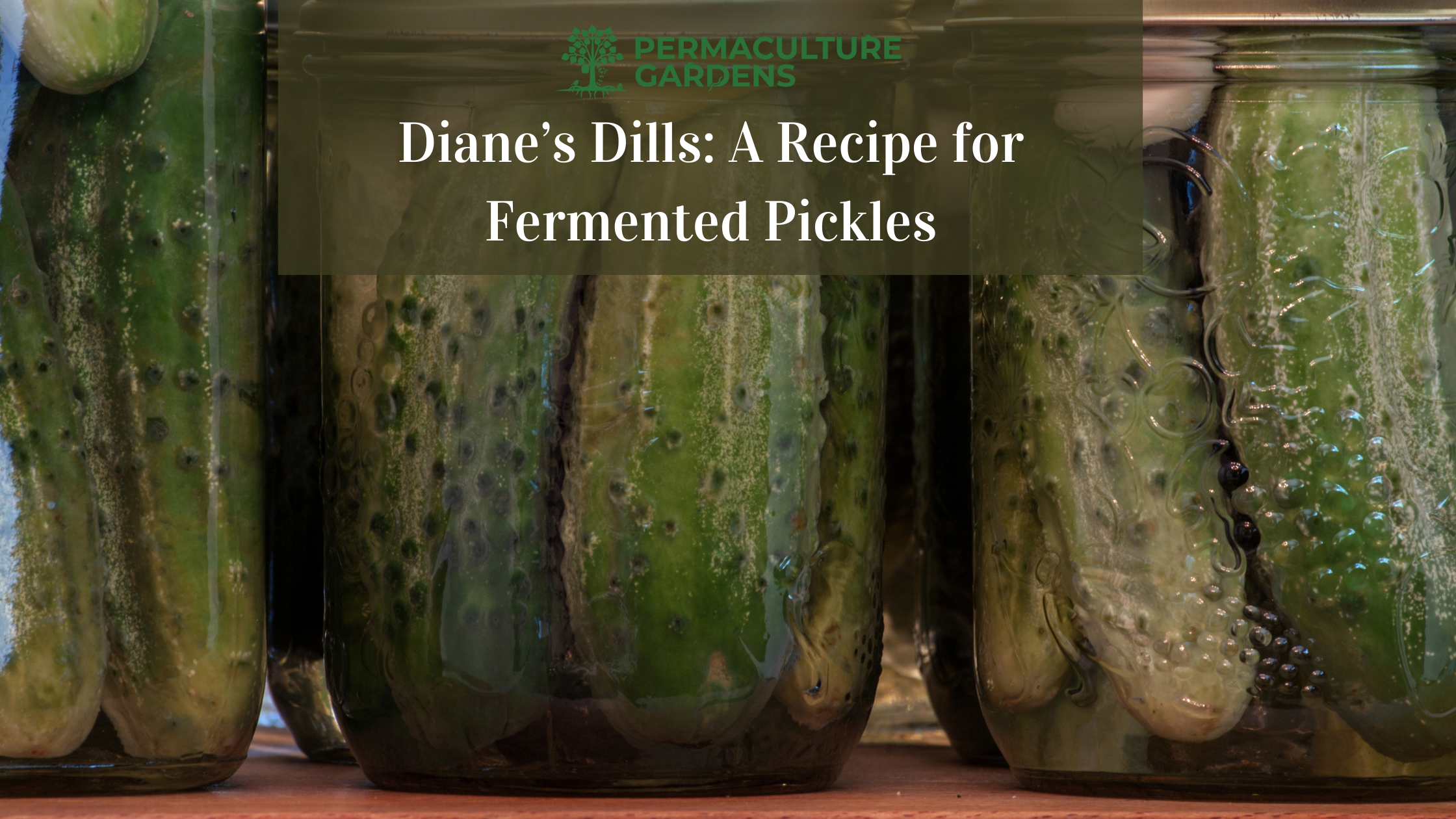 """Featured image for """"Diane's Dills: A Recipe for Fermented Pickles"""""""