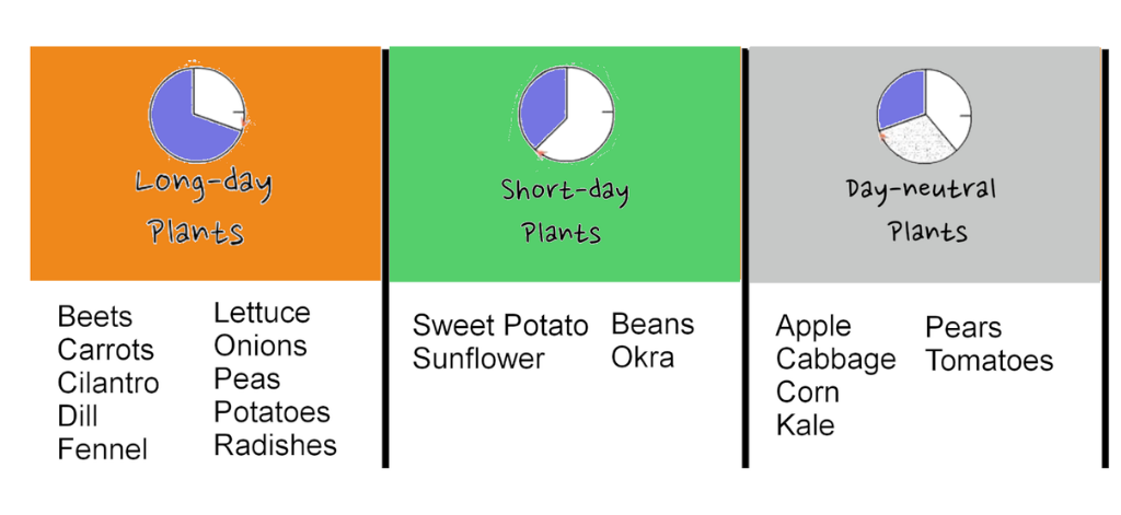 how to figure out what to plant when
