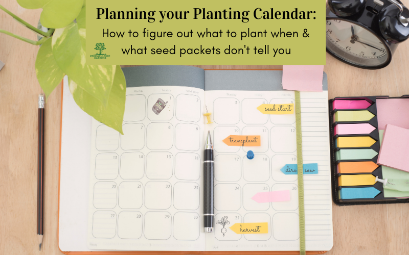 """Featured image for """"Planning Your Planting Calendar: How to Figure Out What to Plant & When"""""""