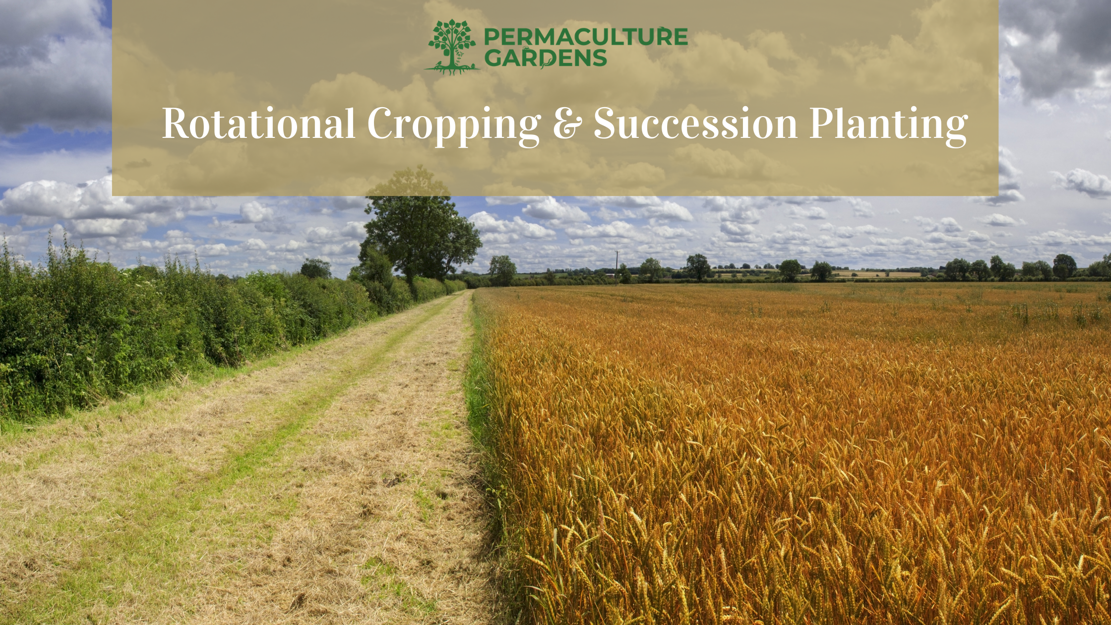 """Featured image for """"How to Use Crop Rotation & Succession Planting"""""""