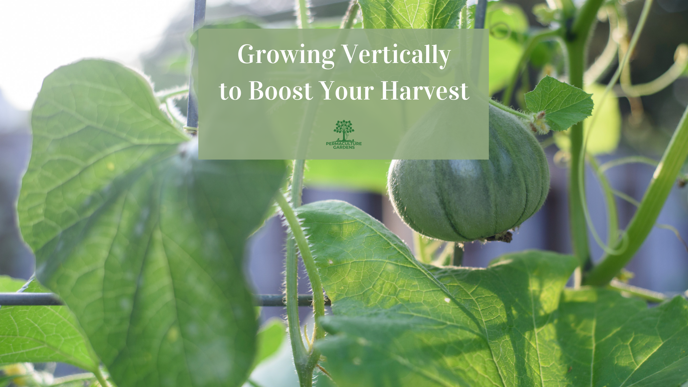"""Featured image for """"Growing Vertically to Boost Your Harvest"""""""